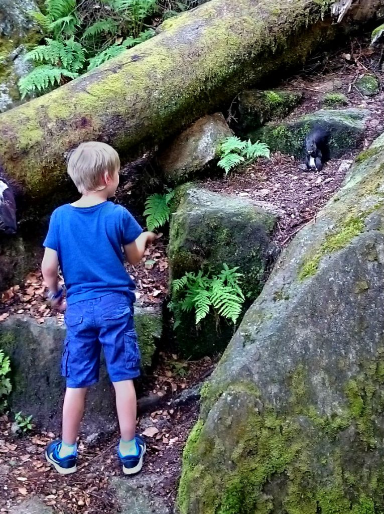 8 Things to experience in the Black Forest with kids. Feed Squirrels at Triberg waterfall in Germany.