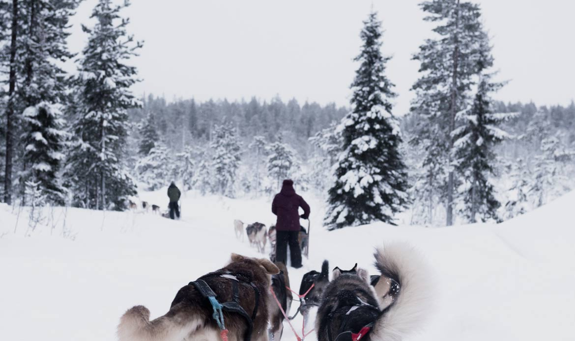 Dog sledding is a fun winter activity