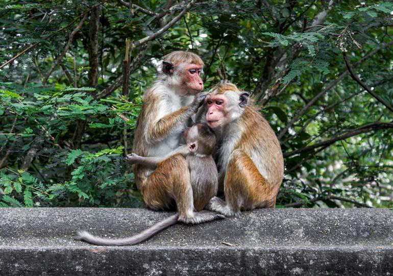 Sri Lanka Wildlife Safari Holiday