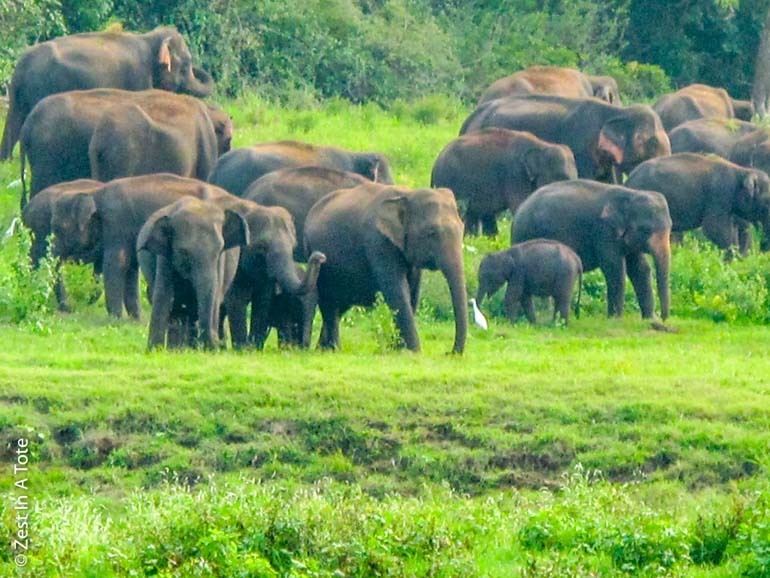 Wildlife safari with kids, viewing elephants