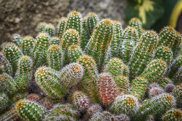 Free tours in Las Vegas at the Cactus Garden
