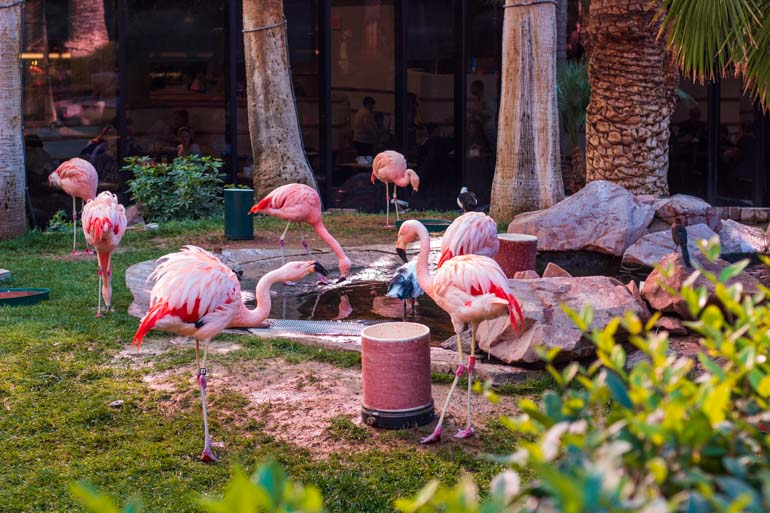 Kids will love the wildlife habitat at the Flamingo Hotel Las Vegas
