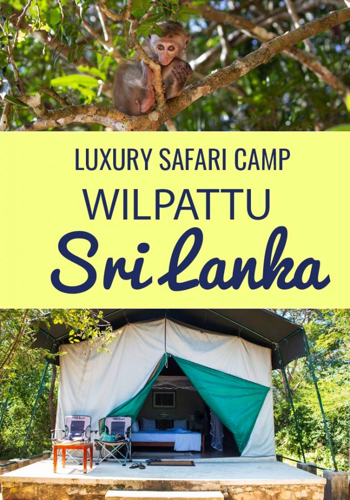 Do have dreams to sleep in the jungle in colonial style luxury. Spend your days seeing exotic animals on Safari and return your luxury camp to sip cocktails around a fire and eat a freshly prepared 3 course meal? Well you can do exactly this in Wilpattu Safari camp and it won't break the bank either. Read more in this post. #Travel #Safari #Glamping #luxuryaccommodation #hotel