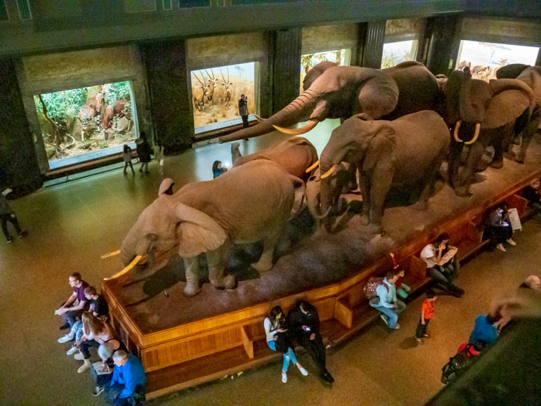 Elephant Stampede at a museum during a visit to New York with kids