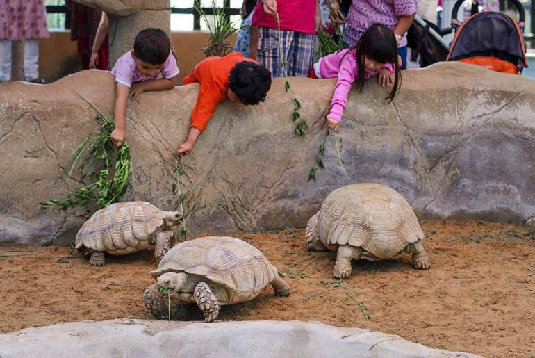 Kids get to feed and interact with the animals at Emirate zoo park in Abu Dhabi