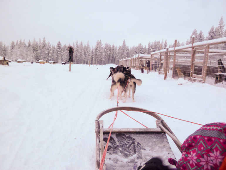 Husky sledding with kids near Levi in Lapland